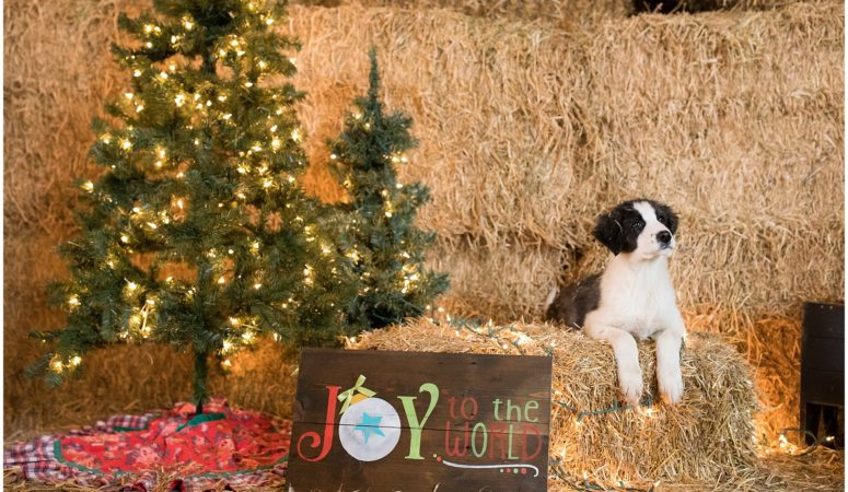 2018 Holiday Mini Sessions at Wonder Tree Farm – Zionsville, IN